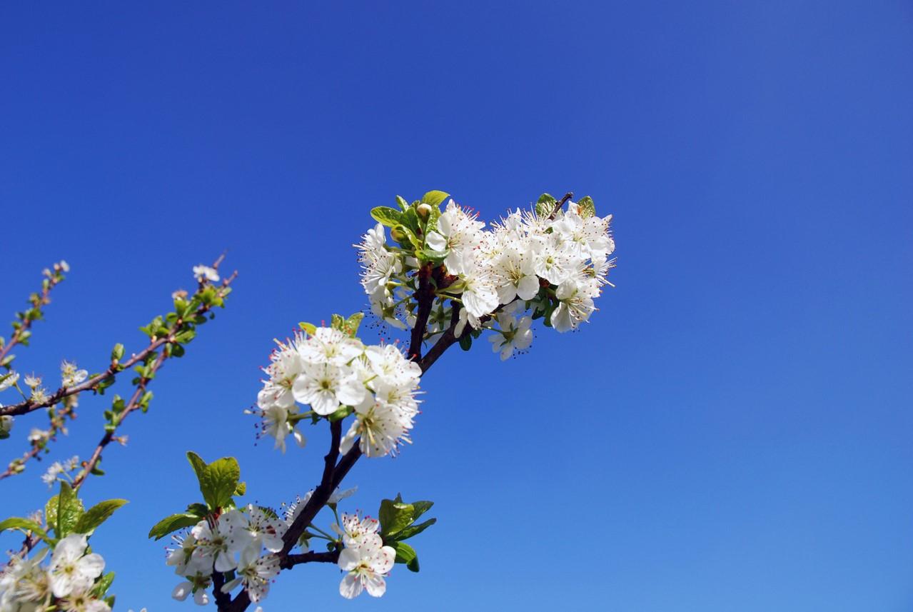 Zoek de lente in je leven! drie online workshops die je leven een goede impuls geven